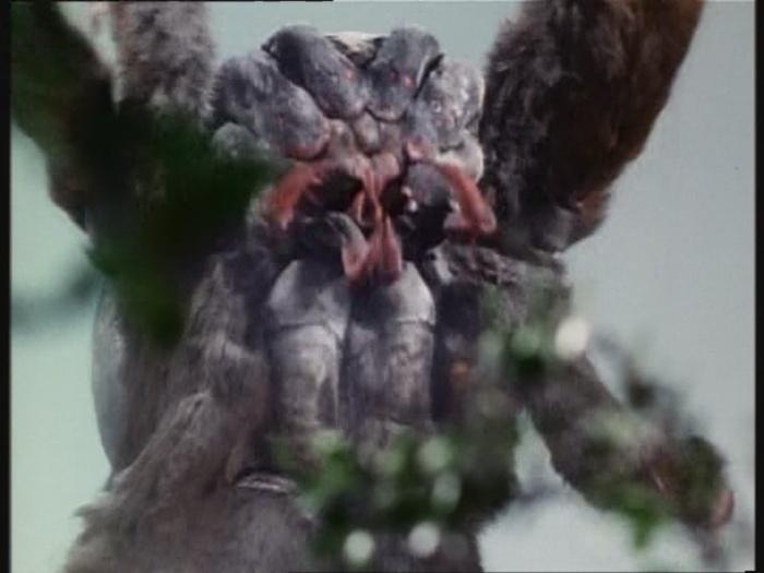 Power Rangers Monster - S01E23 - Spinnenmonster