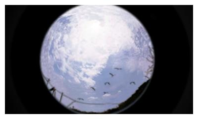 Tomodachi Life - Das Leben in Bommeln beobachten - #1 (3/4)